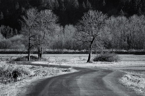 road winter blackandwhite landscape washington curves ridgefield ridgefieldnationalwildliferefuge usnationalwildliferefuges