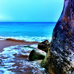 #beach #barbados #nature #iphoneography #wood