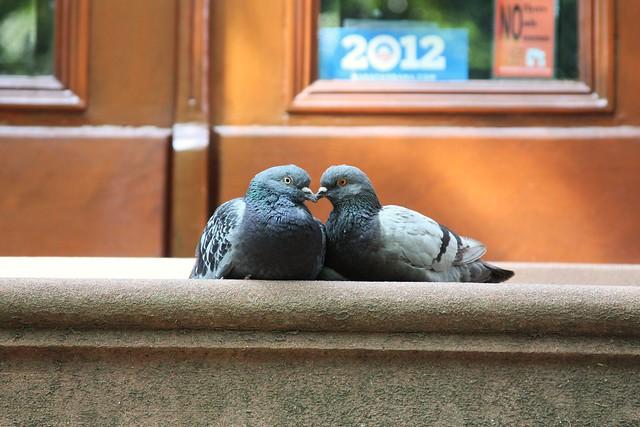 Bird Bisous