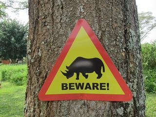 Achtung Rhinozeross