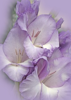 purple softness...