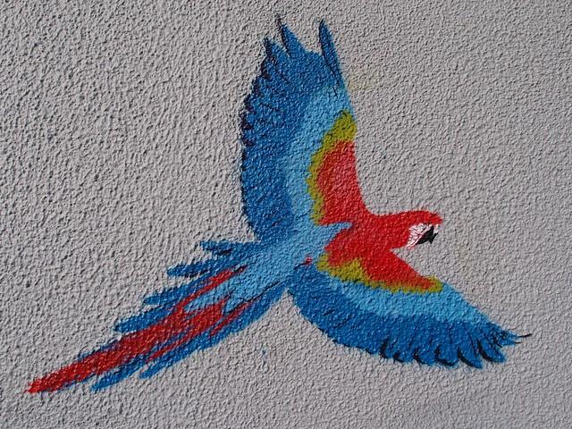 Macaw - Sydney Street Art