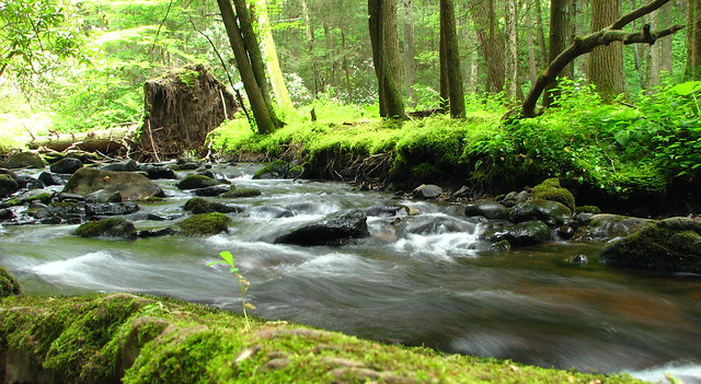 rocky stream and mossy banks