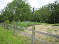 home fencing, land lot, shrub, fence, split rail fence, tree, meadow, pasture,