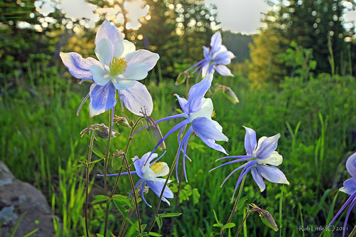 sunrise landscape colorado wildflowers columbines