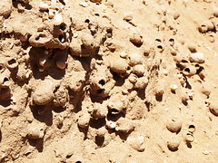 Bee Fossils on La Graciosa, Lanzarote