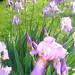Floresen mi jardin