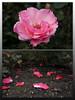 Grown & Fallen by Alexander Skibbe