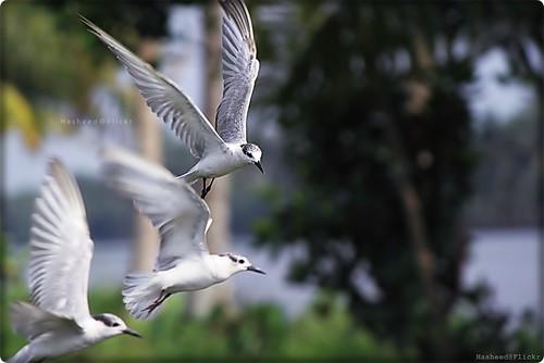 birds kerala higher longer faster alappuzha kuttanad stunningphotogpin