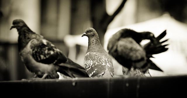 Dirty Damn Bird