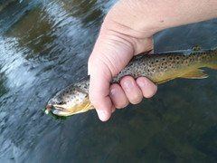 Being single means 12 hours of fishing. Last hour was great dry fly fishing.