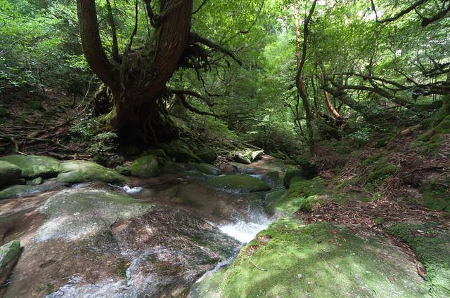 原生林歩道