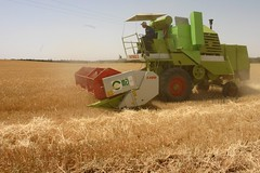 prairie, agriculture, field, event, plant, harvest, crop, harvester,