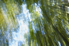 Impression, Bamboo Forest - Segunda