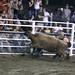 Sarpy Fair Rodeo 487