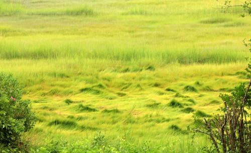green beach lowtide odc2