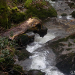 Ruta del Río Loio