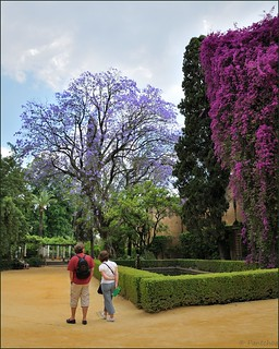Sevilla : Alcázar : Walk in the gardens