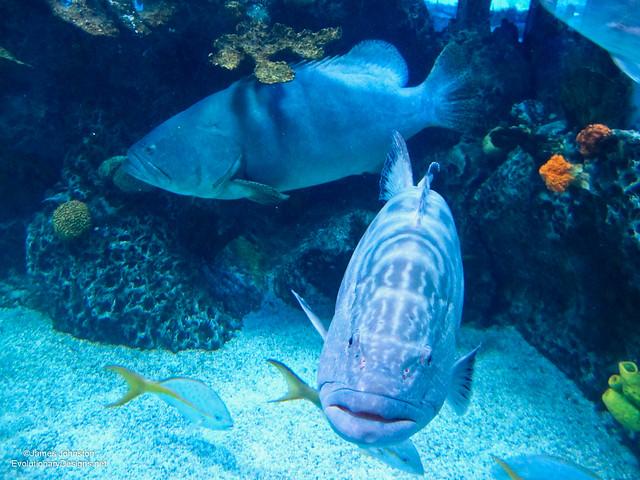 Aquarium Restaurant Galveston Texas Flickr Photo