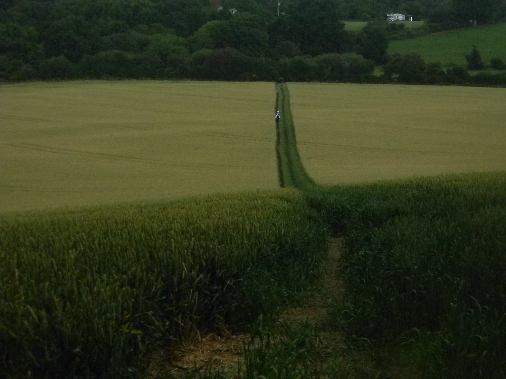 Path through wheat Pulborough Circular
