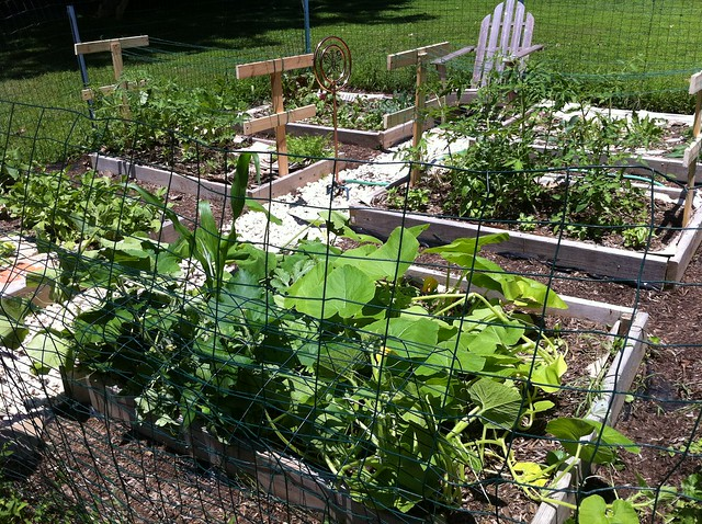 Last year's garden at the height of the season.