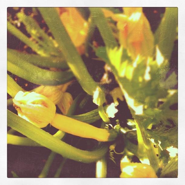Inside a Zucchini Plant