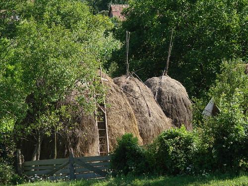 Buglyák - Haystacks