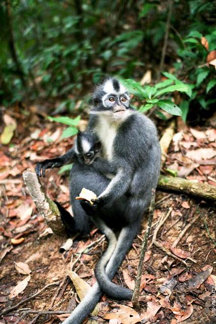 Monkey-punky mom
