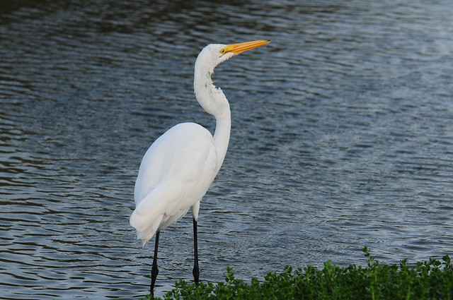 South Padre Island wildlife