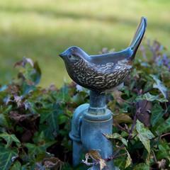 animal, perching bird, fauna, bird, wildlife,