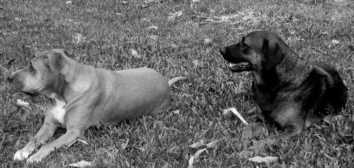 Jackie & Muttley B & W