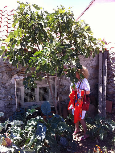 Amélia hunting figs
