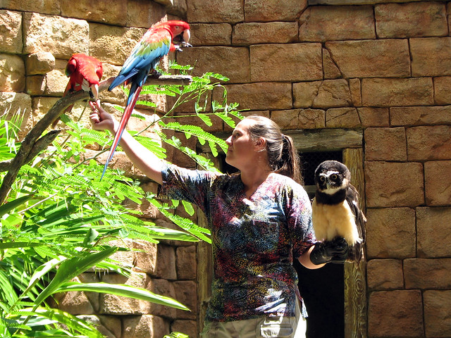 Scarlet Macaws & Spectacled Owl