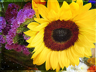 Girasole - Sunflower