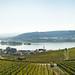 Rhein Panorama