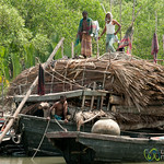 Boat with Wood - Sundarbans, Bangladesh