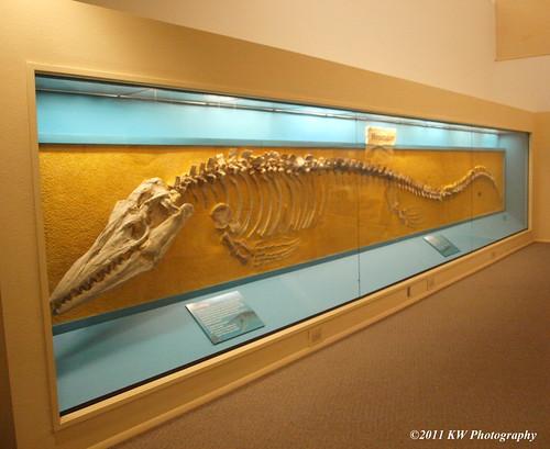 Fossil by kawwsu29