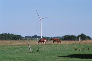 A true prairie scene