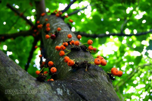 fruitful definition fruitful yield
