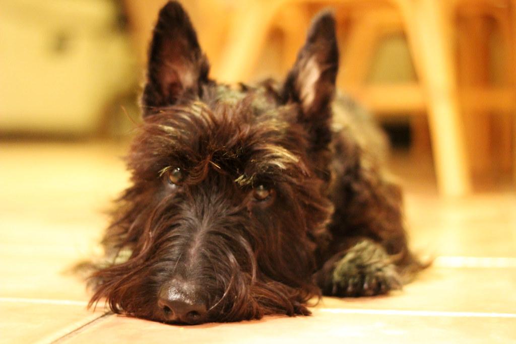 4 / 365 - Black Fluffy Puppy