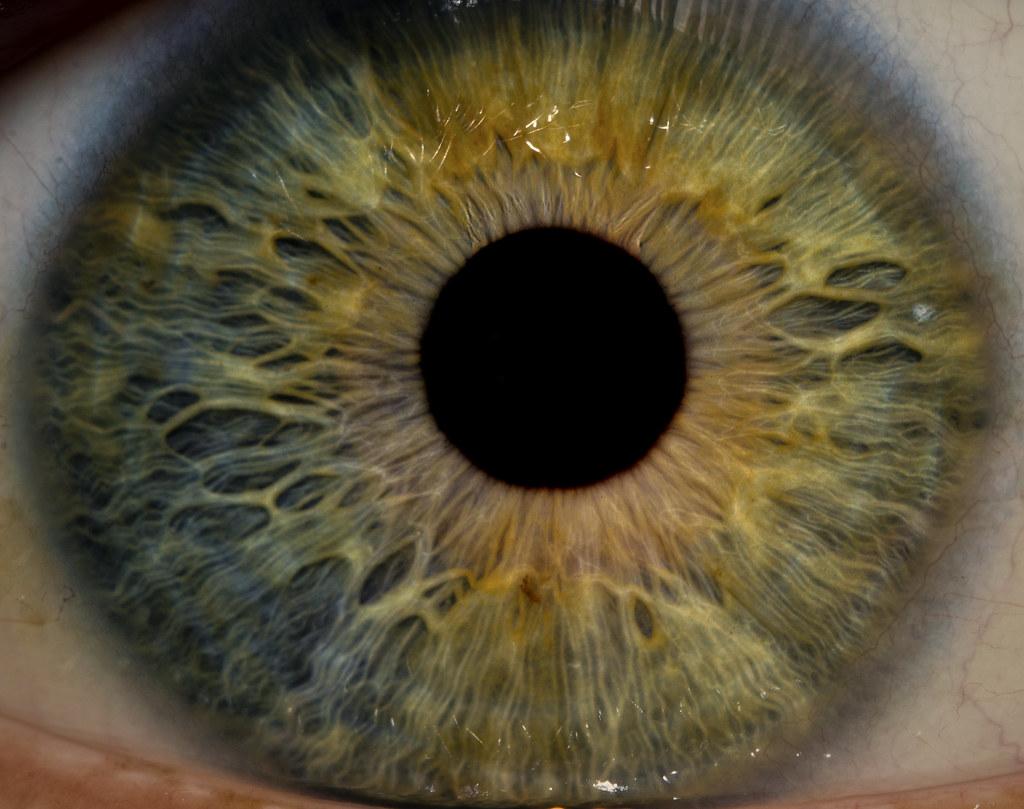 Eye Macro - Iris Detail - a photo on Flickriver