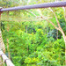 Rainforest canopy walk at Kakum
