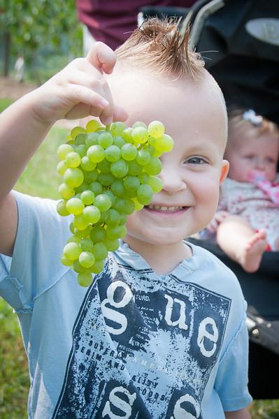 Header of grapey
