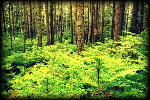 trees green nature forest woods branches queencharlotteislands haidagwaii