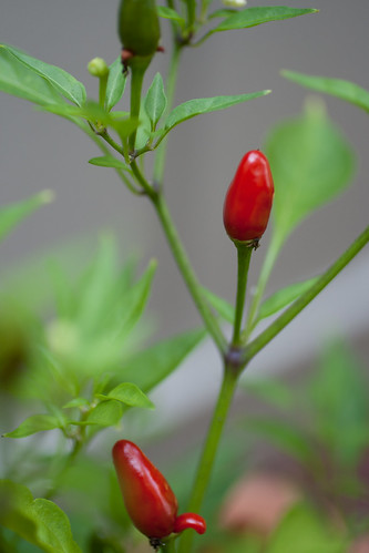 Ripe Thai Chili