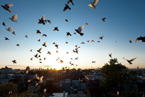 Sunset on Goodwins Roof 2:  Bushwick Brooklyn