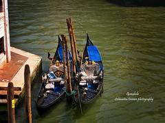 paddle(0.0), water(1.0), vehicle(1.0), sea(1.0), watercraft rowing(1.0), boating(1.0), reflection(1.0), gondola(1.0), watercraft(1.0), boat(1.0), waterway(1.0),
