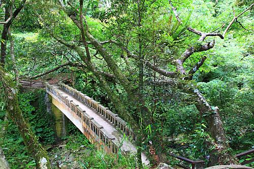 GN71滿月圓國家森林遊樂區-楓香拱橋