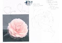 tada365-210-C-Camellia...