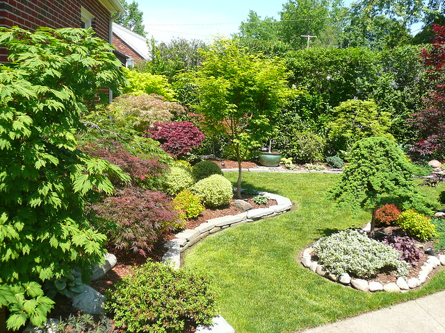 Photo for Garden design with japanese maple